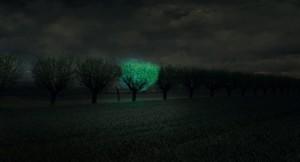 Tecnología bioluminiscente